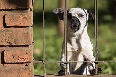 Perrito antipatico (Letua) Tags: perro mascota rejas dog pet fence
