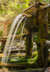 The source (lucasodano) Tags: water drinkable sun forest wild nd1000 long exposure