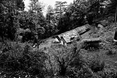 wpid-chakraata-12 (harshchiki) Tags: mountains india hills winter blackandwhite bw