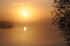 An der Alten Treene-Schleife in Süderhöft - die Sonne über Brunsholm; Nordfriesland (21) (Chironius) Tags: morgendämmerung sonnenaufgang morgengrauen утро morgen morning dawn sunrise matin aube mattina alba ochtend dageraad zonsopgang рассвет восходсолнца amanecer morgens dämmerung himmel sky ciel cielo hemel небо gökyüzü spiegelung refleksion reflection réflexion riflessione отражение reflexión yansıma wolken clouds wolke nube nuvole nuage облака gegenlicht süderhöft nordfriesland schleswigholstein deutschland germany allemagne alemania germania германия szlezwigholsztyn niemcy wasser wasserspiegel treene fluss river rivière rio поток fiume stream nebel fog brouillard niebla