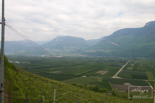 "Strada del Vino - Suedtiroler Weinstrasse • <a style=""font-size:0.8em;"" href=""http://www.flickr.com/photos/104879414@N07/33573127924/"" target=""_blank"">View on Flickr</a>"