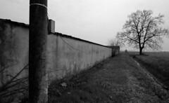 The Wall Inside You (film) (miskin69) Tags: wall kodak film tmax100 nikon f5 nikonf5 20mm nikkor f18 rodinal r09 monochrome bw blackandwhite