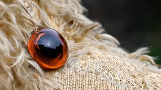 Eye of my old teddy bear