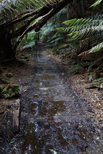 Montezuma Falls - Spoorlijn
