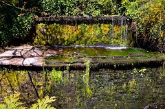 Dam to stream overflow (rustyruth1959) Tags: nikon nikond3200 tamron16300mm yorkshire uk england skipton water stones moss dam stream river beck green skiptoncastlewood ellerbeck canal outdoor trees leaves shrubs ferns woodland path castle explore explored inexplore gettyimages