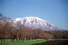 Mt. Iwate (tez-guitar) Tags: mountain snow peaks spring sakura iwate tohoku cherry tree pentax pentaxart farm koiwai