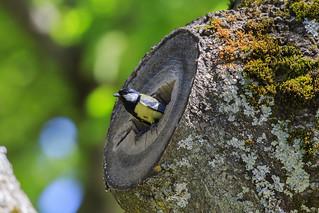 Sans doute un nid de mésange charbonnière ? Sélection