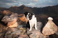 Exhausted Love (svensl) Tags: bert border collie torridon highlands scotland schottland scottish munro conceptual photography