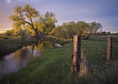 Sunrise Reprieve - Boulder County, Colorado (www.rootsstudiophoto.com) Tags: agriculture bouldercounty reflection sunrise ditch farm field pasture water cottonwood fence sky colorado longmont boulder frontrange frontrangelandscape landscapephotography farmphotography plains prairie