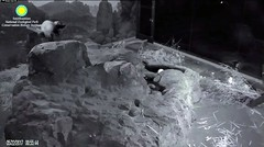 2017_05-22 (gkoo19681) Tags: beibei sleepyhead fuzzywuzzy chubbycubby qtiptush mrcontortionist danglinglegs justbecausehecan sillygoober ccncby nationalzoo