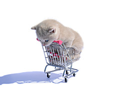 """""""should i jump or should i take a nap?"""" (brescia, italy) (bloodybee) Tags: 365project cat kitten kitty feline animal shopping cart humor fun white shadow"""