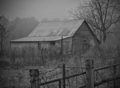 Where Have All the Flowers Gone? (TuthFaree) Tags: hff fencefriday fence gate barn fog rural farm abandoned barbwire ga swga georgia bw