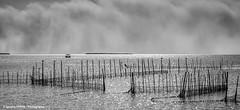 Dramatic afternoon in l'Albufera (Ignacio Ferre) Tags: españa spain agua water albufera albuferanaturalpark l´albufera valencia red net pesca fishing landscape paisaje nikon laguna lago lake airelibre monocromático bw blackandwhite blancoynegro monocromo monochrome