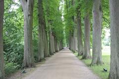 Allee (Katrin Will) Tags: baum tree allee büme trees