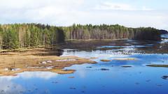 Čepkeliai-Raised Bog (14) (rimasjank) Tags: bog swamp cepkeliai spring nature marcinkonys lietuva lithuania