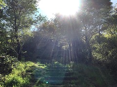 (milianmonbrun) Tags: grass green stairs sky sun