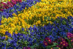 Northampton (stephanrudolph) Tags: d750 northampton handheld uk gb england europe europa flower 70200mm 70200mmvr 70200mmf28gvr