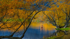 Fishing amongst autumn colour (Jos Buurmans) Tags: 1adultonly 1manonly 1person autumn canterbury fisherman fishing lakemcgregor landscape mackenzie nature newzealand oneperson personrole relaxation southisland sportsandleisure tekapo travel unwinding nz