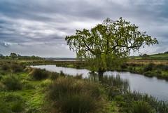 Eyebrook Reservoir (marc_leach) Tags: landscape reservoir eyebrook clouds grey tree trees moody morning wetlands leicestershire rutland rural nikon