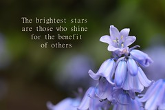 For my mother... (Maria Godfrida) Tags: nature love blue shine star tamron closeup macro quote flower flora green mum mama mothersday mother bright pretty beautiful