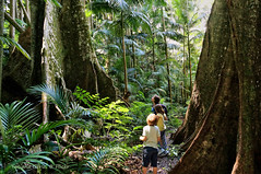 In the woods (Tatters 10mln views-10 years) Tags: australia tamborine forest rainforest people bushwalking buttress giant huge trunk archontophoenixcunninghamiana bangalowpalm arecaceae 2bid517 sloaneawoollsii buttresses trees tree