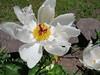 IMG_3306 (reuse) Tags: mayflowers
