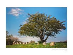 Stein-Zeit (2) (rafischatz... www.rafischatz-photography.de) Tags: germany mecklenburgwesternpomerania island ruegen nobbin megalithictomb riesenbergbarrowdolmen pentax tree