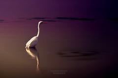 - d é s i r - (swaily ◘ Claudio Parente) Tags: colors lake hiron maremma swaily claudioparente lago