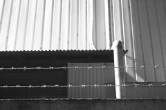 L1013972bw (haru__q) Tags: leica m8 leitz summaron barbed wire barbedwire 有刺鉄線