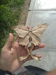 butterfly : nham van son (javier vivanco origami) Tags: javier vivanco origami ica peru butterfly nham van son