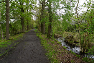 spring in the Witte Veen (7)