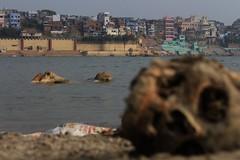 IMG_6243 (anthrax013) Tags: india varanasi corpse dead death bones skull flesh decomposition rot decay necro necrophilia