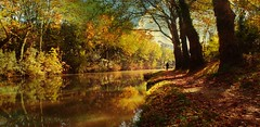Canal du midi (rirififi83) Tags: automne couleurs canal reflets chemin velo solitude loneliness reflection light serenity tones riverscape