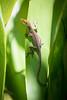 Hawaii (sandrotto) Tags: animal animals wildlife kauai island tropical tropics pacific