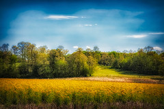 Springtime In Cass County, Illinois (myoldpostcards) Tags: rural country rolling landscape hills trees colorful fields oakford road rd casscounty centralillinois illinois myoldpostcards randall randy vonliski season spring springtimeincasscountyillinois canon 5d markiv