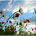 fiori_1276