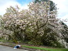 Magnolia (niftyniall) Tags: britishcolumbia essondale riverviewhospital coquitlam