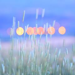 Bokeh (Metatla Photography) Tags: bokeh flouartistique nikond4 metatlanoureddinephotography metatlanoureddine exterieur colors spring photographieabstraite expositionlongue expression color beautiful bleu blue nikon nature algeria skikda yellow green insolite orange paysage quality herbe jaune landscape lights lumière longexposure m