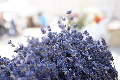 Lavender (Z!SL) Tags: sonyphotographing sony sonyflickraward sonynex nex5r nex emount minoltaemount mirrorless flowers blossom flora flower nature spring germany bokeh bokehwhores dof depthoffield violet colors carlzeiss zeiss sonnar sonnarte1824 sonnar2418za sel24f18z sel24f18za sel24f18 blue bleu blau primavera
