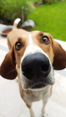 NoseEdition (BphotoR) Tags: nose nase dog hund portrait bphotor