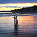 Laika on Higgins Beach at Sunset | Maine