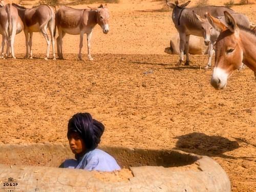 MALI's MEETINGS | 📷🐯 | Carnet d'humanité |  : Nikon D70 - Numérique couleur - 45 photographies | Série : Mai 2017 - Shooting : Octobre 2003 | Bamako - Mopti - Tombouctou - MALI - AFRICA🔎 SEE MORE &  ART PRINTS 🎯 www.degrainsdep