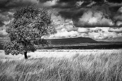 The Tree that Watches the Hill (Teivel) Tags: england anseladams teivelstudios exploration fuji56mmf12 pendlehill walking explore blackwhite sunlight burnley fujifilmxt2 outdoor beautiful moody lancashire hiking fujifilm feilds forest pendle blackandwhite clouds dramatic