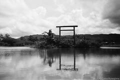 Parque Centenário da Imigração Japonesa (Celso Kuwajima) Tags: leicasummiluxm3514 epsonv800 silverfastai landscape ilfordpan400 torii leicam4 outdoor analogphotography lake 20170527 bw mogidascruzes sãopaulo brazil br