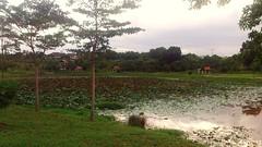 https://foursquare.com/v/denai-alam-lake-view/4e9877404690053a31c49250 #natural #garden #travel #holiday #green #outdoor #Asia #Malaysia #selangor #Shahalam #denaialam #大自然 #公园 #外景 #旅行 #度假 #绿色 #亚洲 #马来西亚 #雪兰莪 #沙啊南