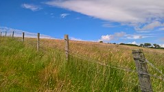 Fence (mcginley2012) Tags: fence friday donegal ireland summer field farm hillside blue green grass cameraphone lumia650 microsoftlumia650 nature wire barb barbedwire meadow