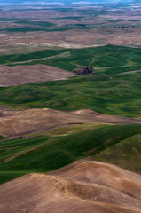 Patterns of the Palouse (Greg Mombert) Tags: washington palouse hills wheat fields patterns green brown pullman steptoe butte state park northwest rolling contour landscape agricultural farms farmland sal70300g