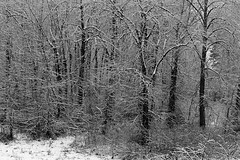 Woman Small Compared to Snow Covered Trees (Jim Corwin's PhotoStream) Tags: atmosphere climate atmospheric weather meterorology nature beautyinnature sky atmosphericscience naturalscience naturalworld outdoors dramatic nobody photography horizontal winter snow cold freeze freezing icecrystalsfrozen rows subfreezing trees cascademountainrange cascademountains scenic landscape travel localattractions sightseeing tourism tourists lady woman women girl feminine lass leavenworth smallbigcontrast