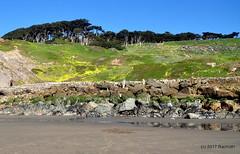 DSC_0280 (rachidH) Tags: scapes views pacific ocean sealrocks cliffhouse sutro baths tide lowtide lobos pointlobos oceanbeach sanfrancisco sf sanfran california rachidh nature