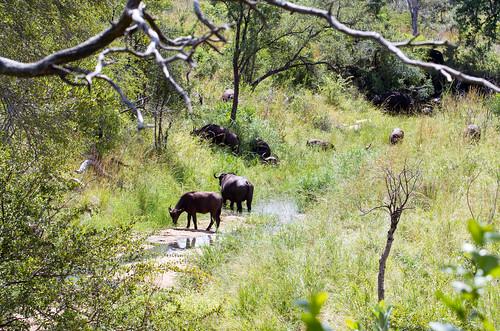 KrugerParkREIZ&HIGHRES-53